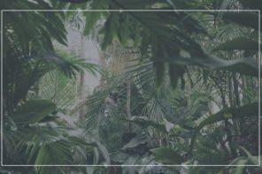La moda green | Febbraio Cover Story
